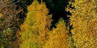 04-Herbst