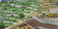 05-Sto-Antao-Terrassenfelder