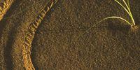 16-Sandwueste-Gras